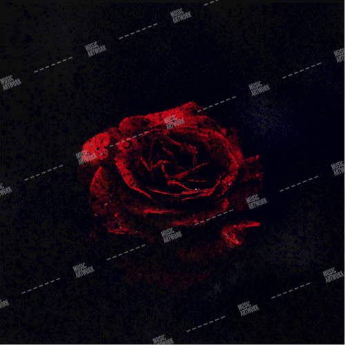 album art with a rose in dark background