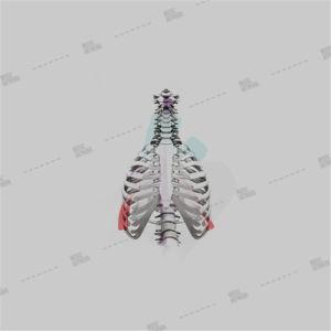 album art with skeleton