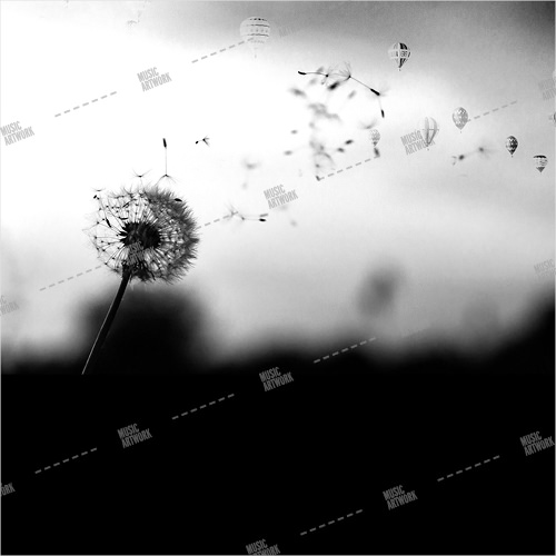 black and white album art with flower