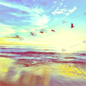 Album art with a beach, sea and birds