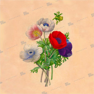 Artwork with coloured flowers and poppy