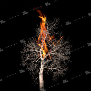 Album artwork design with tree burning