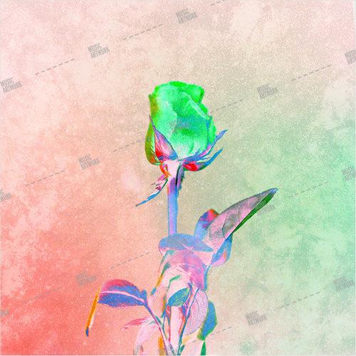 Album artwork design with rose