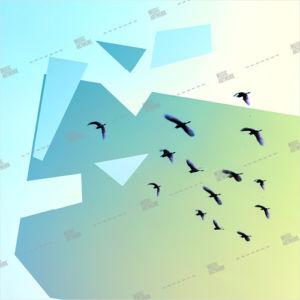 album art birds