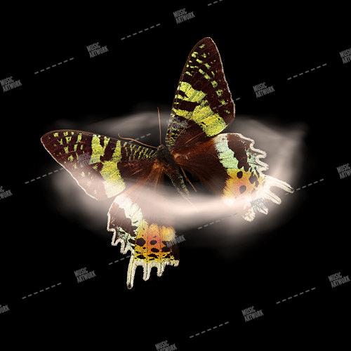 butterfly in smoke
