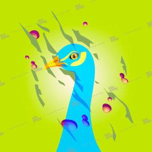 bird, peacock,